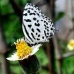 Karthi Sadhun Profile Picture